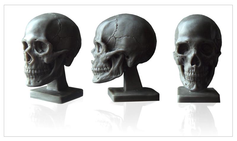 $39.97 Human Anatomy : Human Skull Model