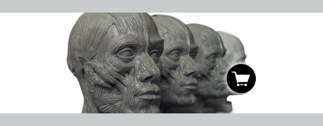 3997 Human Anatomy Ecorche Human Head Model