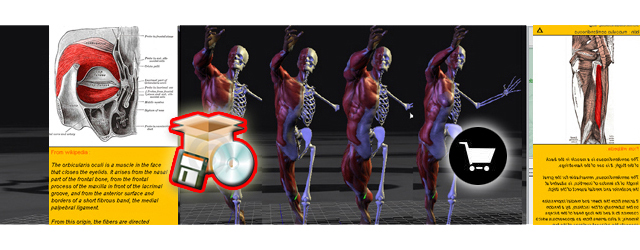 $49.97 3d virtual human anatomy studio, Muscles